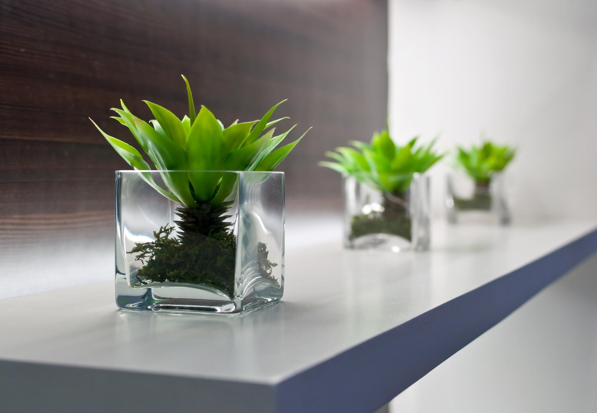Planten Op Kantoor : Levering en onderhoud kantoor planten
