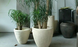 Zijden planten groothandel